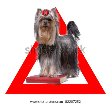 Auto sticker with yorkshire terrier on it isolated on white - stock photo