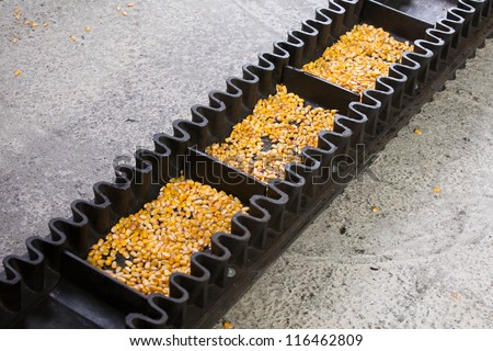 Automated food production concept. Conveyor belt with corn - stock photo