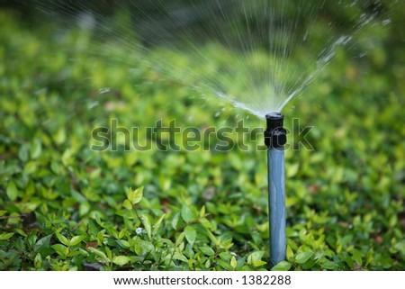 Automated sprinkler, watering shrub