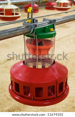 Automatic feeding trough on a modern integrated poultry farm - stock photo