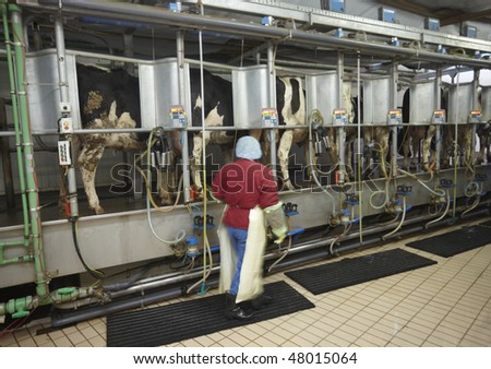 automatic milking system AMS industry cow farm - stock photo