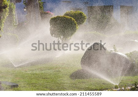 Automatic Sprinkle plants in the garden. Photo for microstock - stock photo