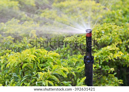Automatic Sprinkler Watering the plants