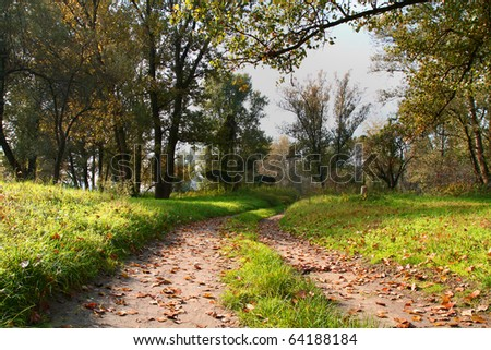 autum forest landscape - stock photo