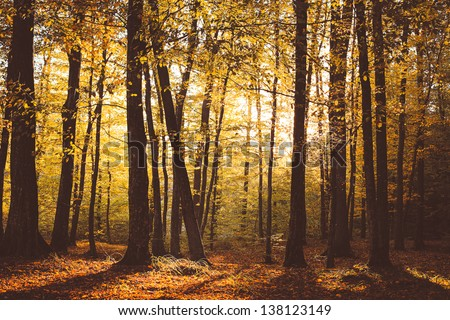 Autum in the forest - stock photo