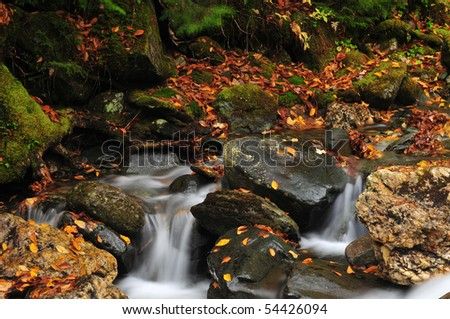 Autum leaves covered cascading brook in vermont