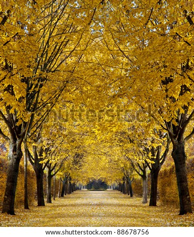 Autumn alley - stock photo