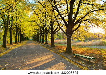 Autumn alley and empty bench in Botanical garden at sunset. Kiev, Ukraine