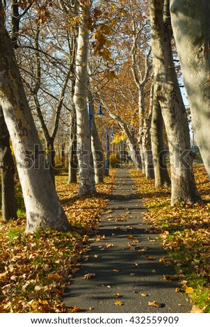 autumn alley footpath with fallen maple leaves - stock photo