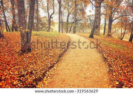 Autumn alley in foggy weather with fallen leaves, soft focus processing - beautiful autumn landscape in cloudy weather