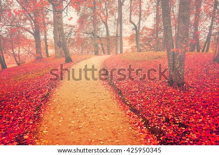 Autumn alley in foggy weather with red fallen leaves, soft focus processing - colorful autumn landscape in cloudy weather - stock photo