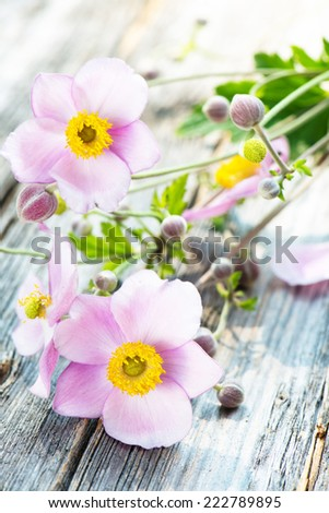 Autumn anemones on wooden background  - stock photo