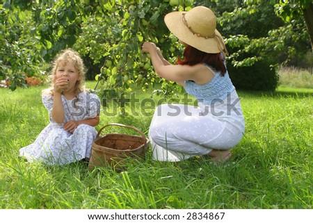Autumn Apple Picking in farm in Estonia - stock photo
