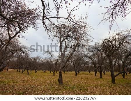 Autumn apple tree garden - stock photo