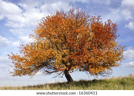 autumn apple-tree on background of blue sky