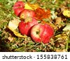 Autumn apples and leaves in the grass - stock photo
