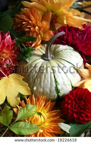 autumn arrangement - stock photo