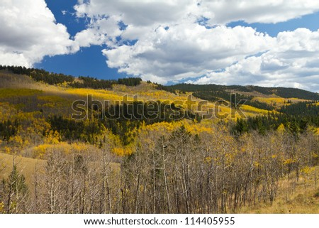 Autumn Aspen Forest in the Colorado Mountains - stock photo