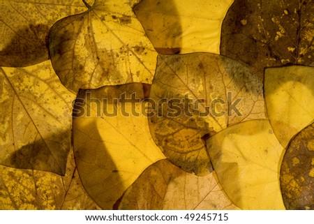 Autumn aspen leaves background pattern - stock photo