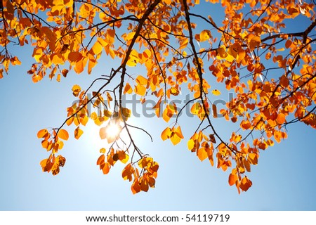 Autumn aspen leaves with sun - stock photo