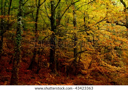 autumn at the forest, portuguese national park - stock photo