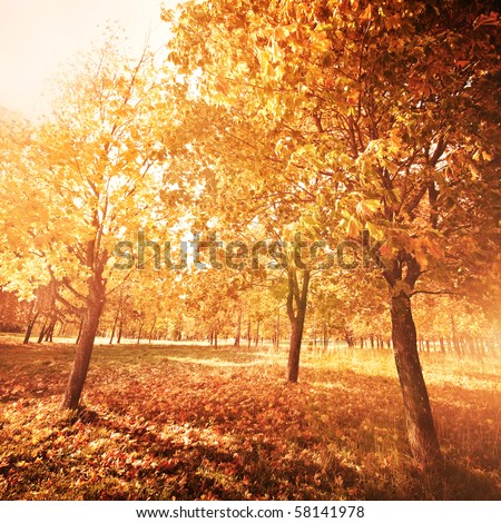 Autumn at the morning park - stock photo