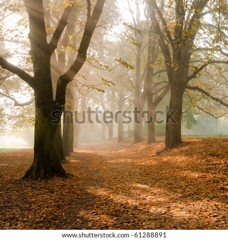 Autumn at the morning, park - stock photo