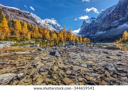 Autumn at the Opabin Plateau with golden larch trees high in the Alpine, while hiking in the Back country of Lake O'Hara in Yoho National Park, British Columbia, Canada. - stock photo