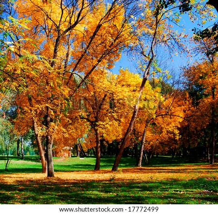 Autumn at the park