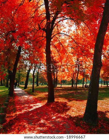 Autumn at the park - stock photo