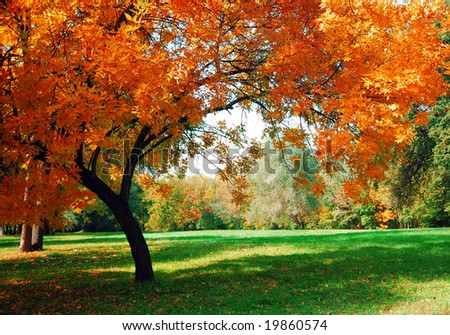 Autumn Park Background, Fall. Beautiful Nature Scene Of Autumn ...