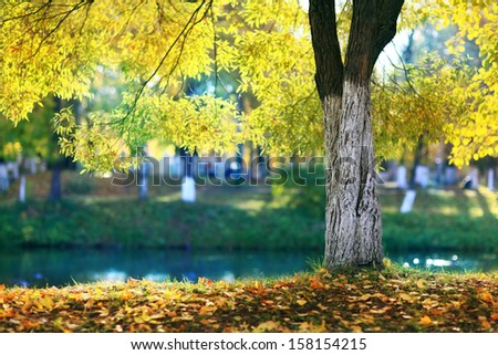 Autumn at the pond park - stock photo