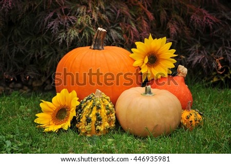 Autumn. Autumn decoration. Autumn flowers arrangement. Autumn pumpkin. Autumn vegetables. Autumn nature colors. Autumn card. Autumn deco on nature background. - stock photo