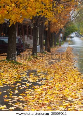 Autumn avenue - stock photo