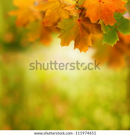 autumn background - stock photo