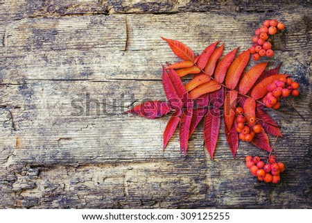 Autumn background/Autumn leaves and berry over wooden background/Thanksgiving day concept - stock photo