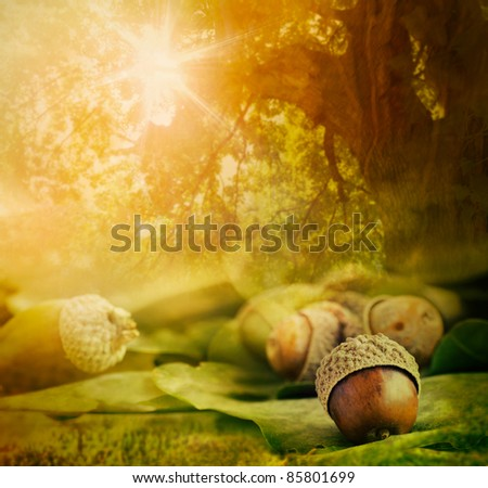 Autumn background. Border design with oak acorns and bokeh lights. - stock photo