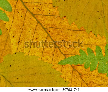 Autumn background. Close up leaves, macro texture.