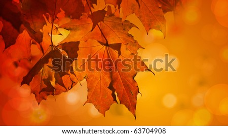 Autumn Background | Close Up Leaves | Vivid Colors
