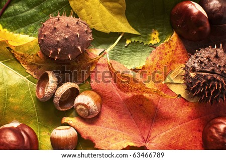 Autumn background. Colorful autumn leaves, acorns and conkers