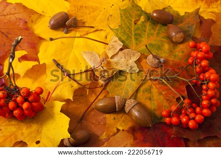 Autumn background, leaves, acorns, ashberry - stock photo