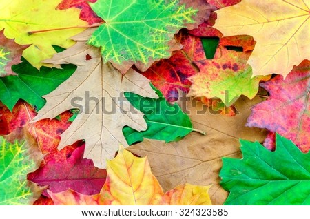 Autumn background. Natural colorful background with fall leaves.