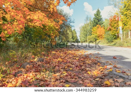 Autumn background. Road. Copy space. - stock photo