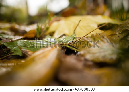 Autumn background. Wet leaves.
