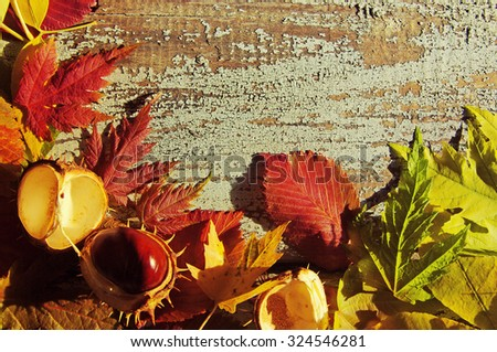 Autumn background with bright autumn leaves. Autumn leaves and chestnuts on a textural old wooden surface. With copy space