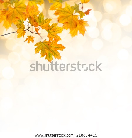 Autumn background with bright leaves - stock photo