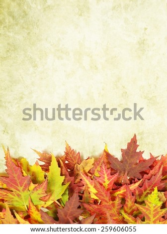 autumn background with colored leaves - stock photo