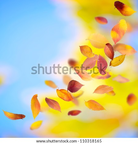 Autumn background with falling leaves and copy space - stock photo