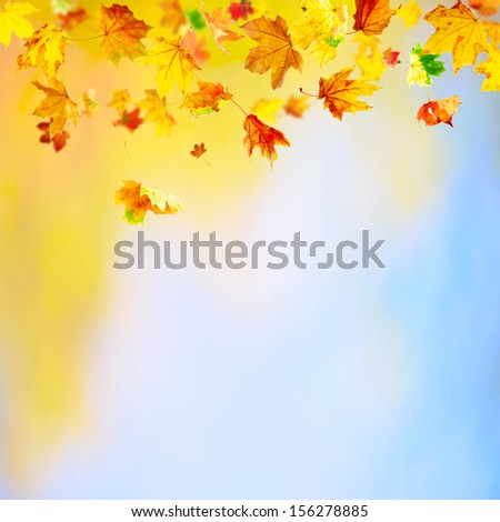 Autumn background with falling maple leaves and copy space - stock photo