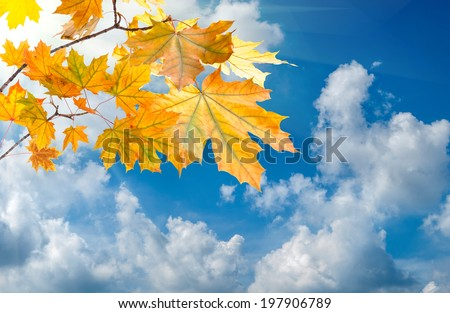 Autumn background with foliage on branch - stock photo